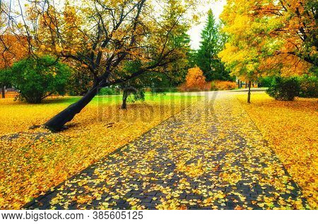 Autumn landscape. Autumn alley in the city autumn park. Colourful autumn park alley in cloudy autumn weather. Autumn park alley with golden autumn fallen leaves on the ground