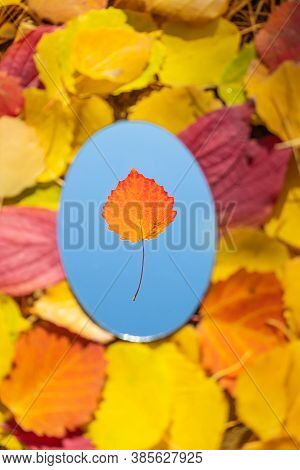 The Mirror Lies On Autumn Yellow And Red Leaves. The Mirror Reflects A Cloudless Blue Sky And A Red