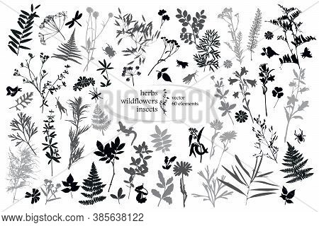 Set Of Silhouettes Of Botanical Elements And Insects. Herbarium. Grass, Wildflowers. Vector Illustra