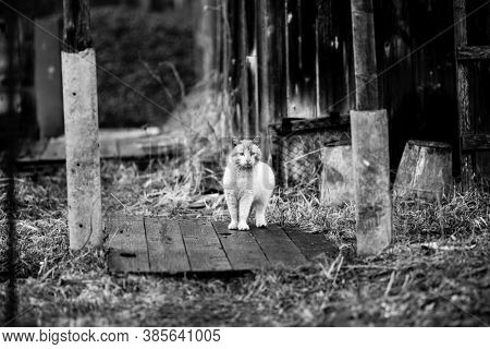 Stray cat outdoors. Black and white photo.