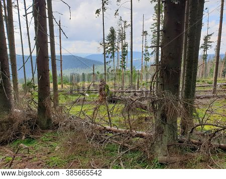Deforestation Issue In Nature Park. Environmental Problem In Apuseni Mountains. Cutting Down Pine Tr