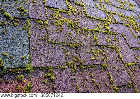 Bituminous Shingles With Sprouted Moss. Old Weathered Tile Roof.