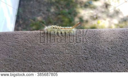Fuzzy Green Caterpillar Insect On Wood Railing