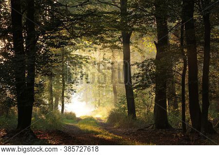 Country road path autumn trees sunrise Nature background alley way morning Nature background forest woods dawn sunset Nature background mist fog Nature background Nature background trail tree Nature background light sunlight Nature park Nature background.