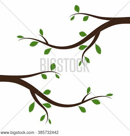 Tree Branch With Green Leaves. Vector Illustration. Abstract Branch With Leaves, Isolated.
