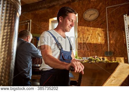 Attentive Brunette Man Crushing Grapes For Making Wine