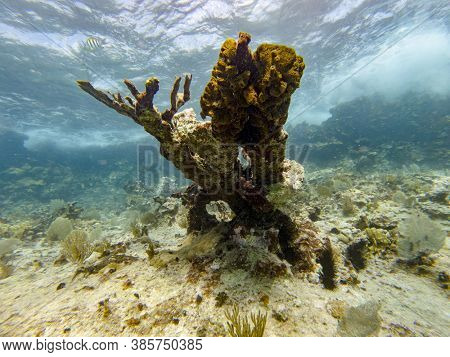 Coral Reef With With Hard Corals And Sergeant Fish Swimming On Shallow Water Surface At Summer.