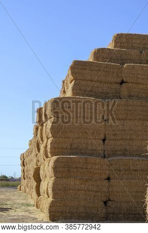Piled Stacks Of Dry Straw Collected For Animal Feed. Dry Baled Hay Bales Stack Open Air. Agribusines