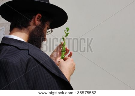 BNEI-BRAK, ISRAEL - SEPTEMBER 22: The young religious Jew in a hat is choosing  Adas at the market on the eve of Sukkot September 22, 2010 in Bnei Brak, Israel. This was Sukkoth market
