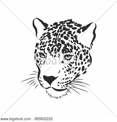 Jaguar. Hand Drawn Sketch Illustration Isolated On White Background, Jaguar Animal, Vector Sketch Il