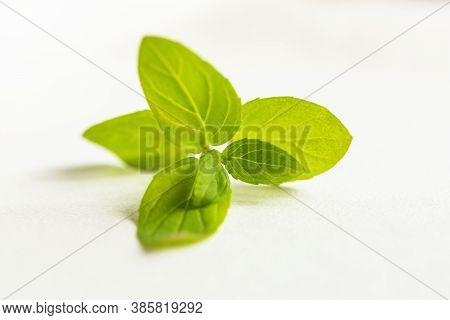 A Sprig Of Mint On A White Background. Isolated Green Mint Leaves. A Plucked Mint Branch On A Light