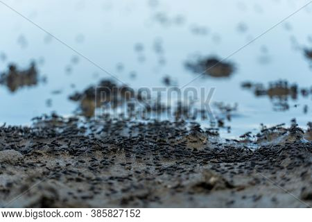 Swarm Of Flying Mosquitoes And Insects Around The Lake During Hot Summer