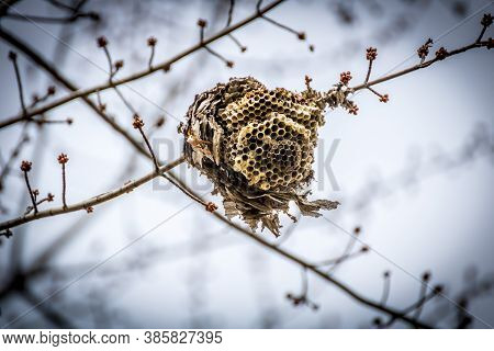 Broken And Dormant Beehive During The Winter Months