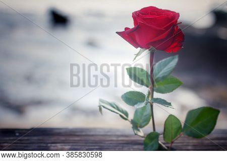Single Red Rose On A Bright Vintage Background. With Copy Space For Your Text Message Or Design. Sti