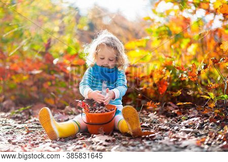 Girl Holding Acorn And Colorful Leaf In Autumn Park. Child Picking Acorns In A Bucket In Fall Forest