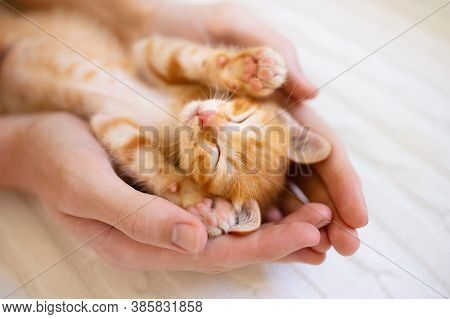 Kitten Sleeping In Man Hands. Cozy Sleep And Nap Time With Pets. Pet Owner And His Pet.