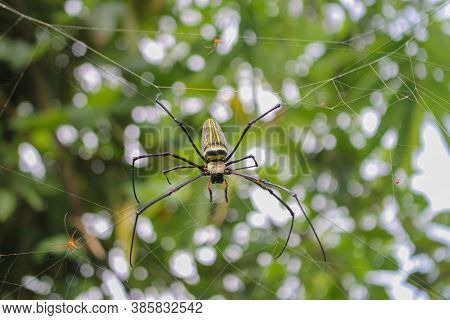 Spider,spider Siting On The Net,big Spider,spider In Asis Images