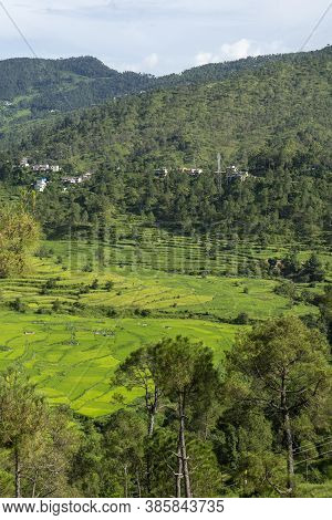 Asia Rice Field By Harvesting Season In Mu Cang Chai District, Yen Bai, Vietnam. Terraced Paddy Fiel