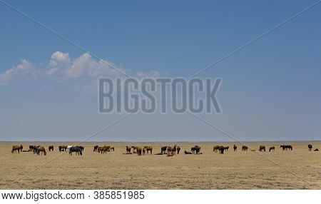 Great Herd Of Horses In The Steppe Of Of Kazakhstan On A Hot Summers Day.