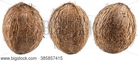 Three coconuts - large brown tropical fruits isolated on white background.