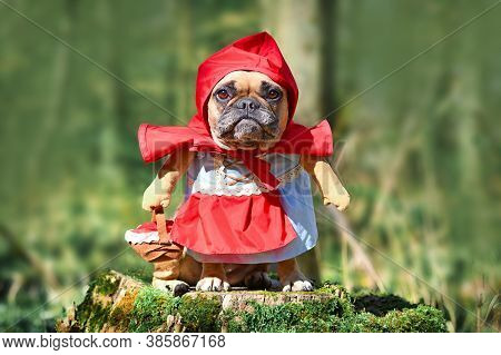 Funny French Bulldog Dos Dressed Up As Fairytale Character Little Red Riding Hood With Full Body Cos