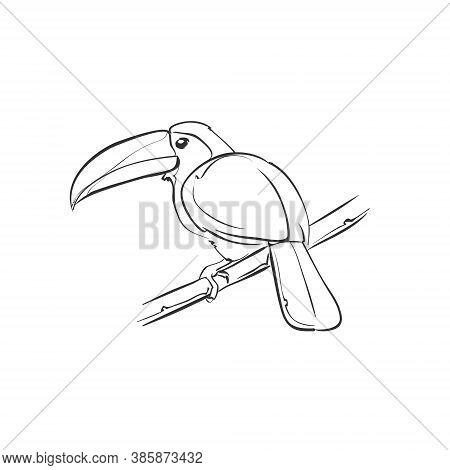 Toucan Doodle Illustration Design Vector Art - Nature Tropical Bird Wildlife Zoo Jungle Cartoon Char