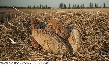 Loaves Of Different Types Of Bread In Wheat Field. Assortment Of Bread Concept. Fresh Baked Bread On