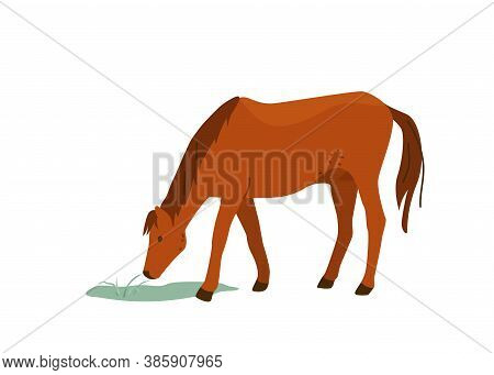 Brown Horse Eat Grass Vector Illustration. Isolated On White Background. Mare Equine In Simple Carto