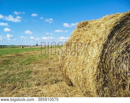 Hay In Round Bales Lies On The Field. Hay Bale. Blank. Rural Life. Grass, Circle. Close-up Harvested