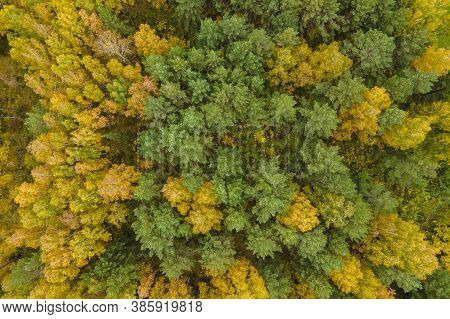 Top Down Autumn Wood. Nature Beautiful Background. Aerial Top View Of Autumn Forest With Colorful Tr