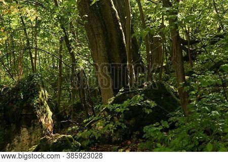 Background, Landscape - Wet Mountain Subtropical Forest After Rain