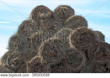 Many Yellow Round Bales Of Hay Lie In A Heap Against The Blue Sky. Copy Space. Many Bales Of Hay Sta