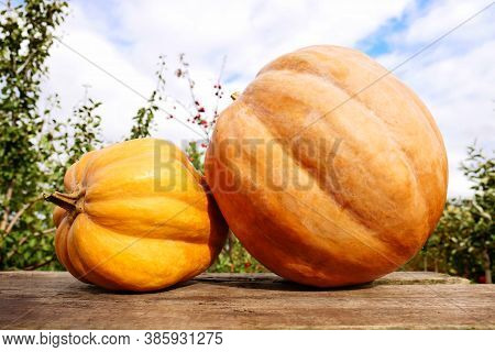 Autumn Harvest. Pumpkins On The Background Of The Garden