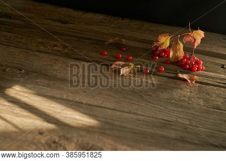 Viburnum Berries And Yellowed Leaves On The Surface Of Old Wood Boards. Autumn Still Life