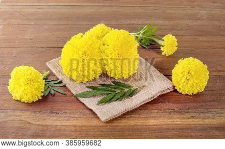 Yellow Marigold Flower, Tagetes Erecta, Mexican Marigold, Aztec Marigold, African Marigold Isolated