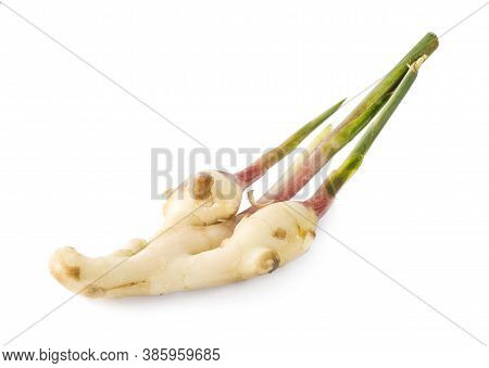 Young Galangal An Isolated On White Background.