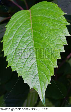 Big Green Textured Leaf Closeup Background Photo