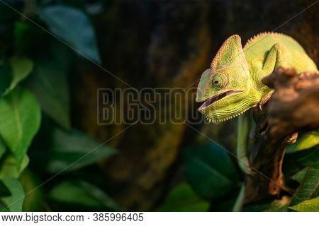 Red Eared Slider Turtle Trachemys Scripta Elegans Resting In The Sunlight