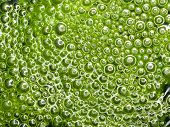 Abstract background of green bubbles in swamp poster
