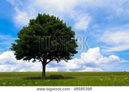Landscape - lonely tree on green field, Maple Tree