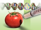 Genetically modified tomato and dna sequence. Digital illustration. poster