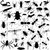 37 pieces of detailed vectoral bug silhouettes. poster