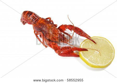 Crawfish with lemon on the isolated background. poster