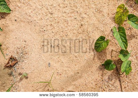 Soil Ground With Grass As Frame