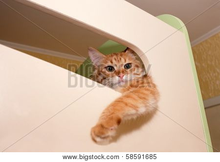 Red cat is in an elevated position, dangling paw down poster