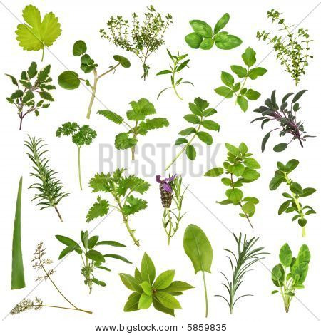 Large herb leaf selection in abstract design over white background. poster