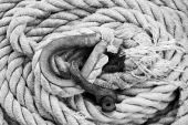 Tangled ropes in black and white with high contrast poster