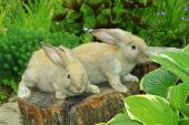 Little rabbits sitting on the stump in garden poster