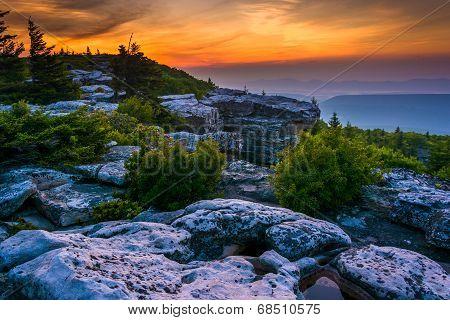 Sunrise At Bear Rocks Preserve, In Dolly  Sods Wilderness, Monongahela National Forest, West Virgini