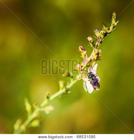 macro of the bug on the flower twig